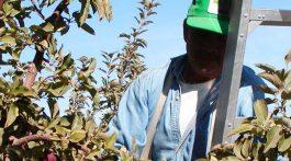 Salute sicurezza in agricoltura