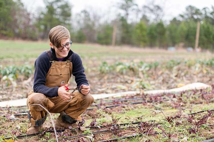 Lavoro Occasionale Agricoltura