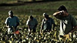 Datore di lavoro Agricoltura Comunicazione infortuni